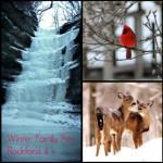 Rockford's Winter Wonderland