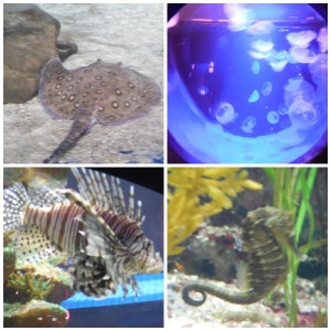 Some of the ocean life on display at the Greater Cleveland Aquarium.