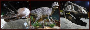 Some fun features at Natural History Island include dinosaur skeleton replications and dinosaur figures. Very cool!