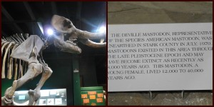 Skeleton of a mastadon. See how they give information along with the features? Very good for educational purposes!