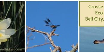 Grosse Savanne Eco-tours in Louisiana, #ecotourism #bayou #marshland