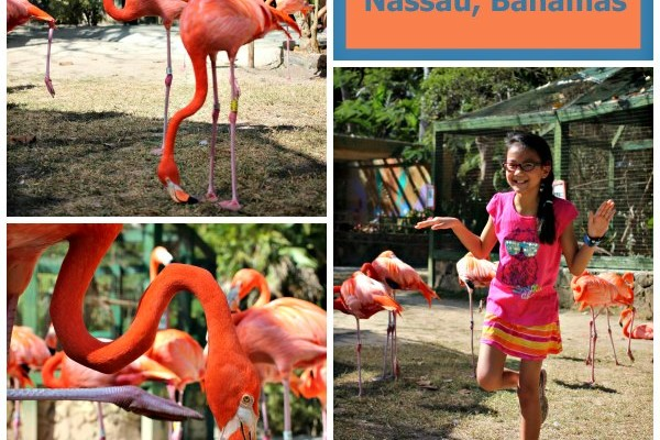 Ardastra Gardens in Nassau: A tropical treat