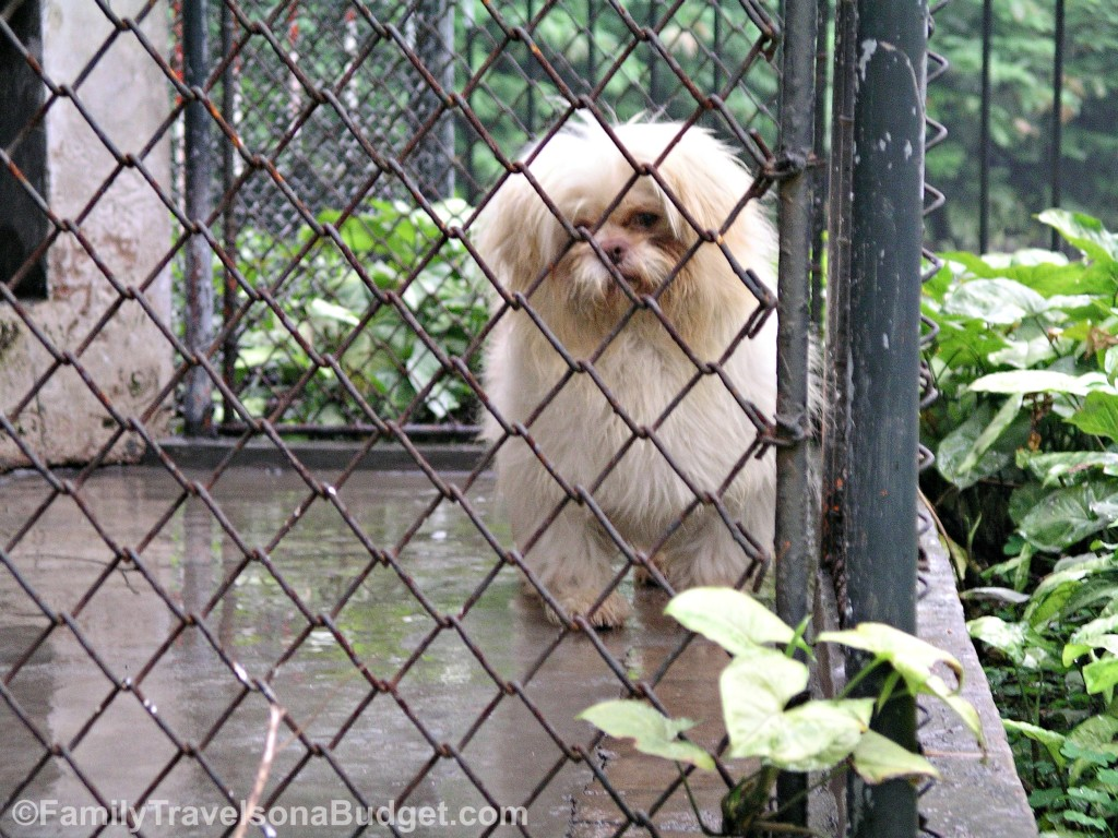 Dog in Zoo Guangzhou China