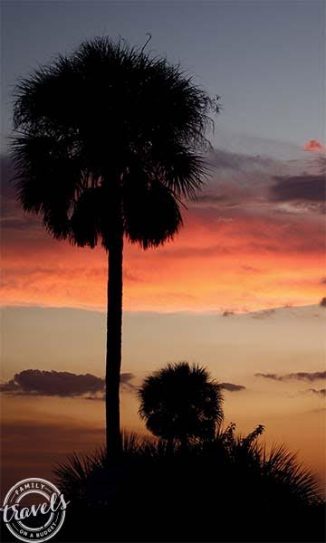 Palm trees at Siesta Beach