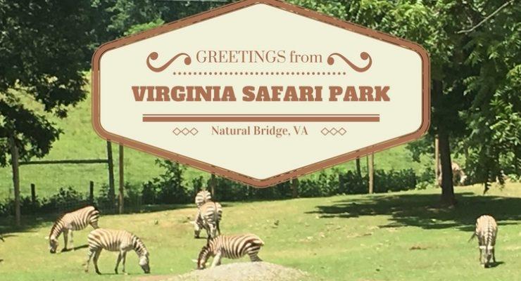 Virginia Safari Park: 5 star fun!