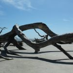 Magical Driftwood Beach: A must see!