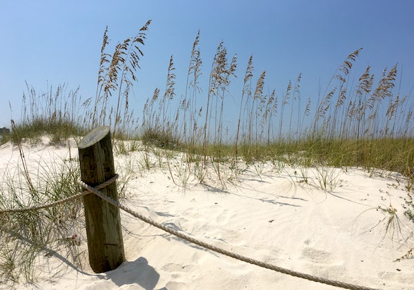The sea oats and white sand dunes of the Gulf of Mexico