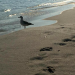 Respect the environment at the beach and leave only footprints