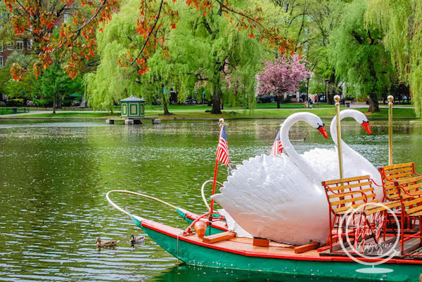 The Boston Common Swan Boats at Boston Public Garden