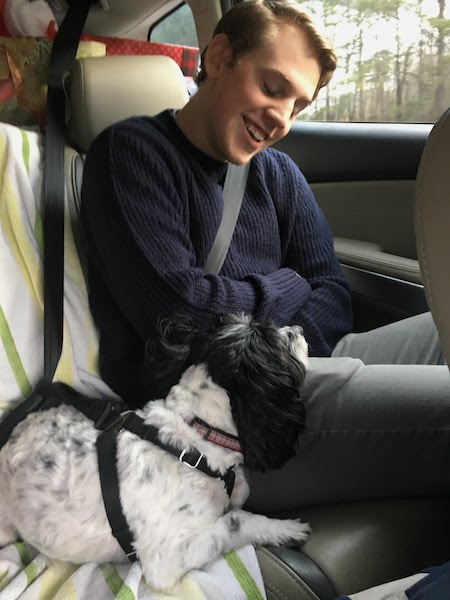Dog travel accessories include safety harnesses and blankets or towels