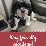 Pet friendly vacations start with the right planning and equipment for a safe, fun vacation.