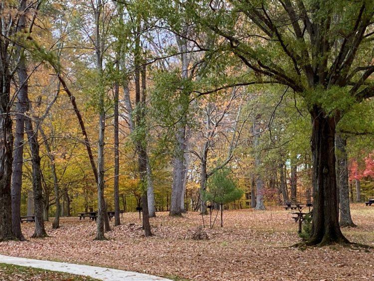 Picnic area at Prince William Park in Virginia