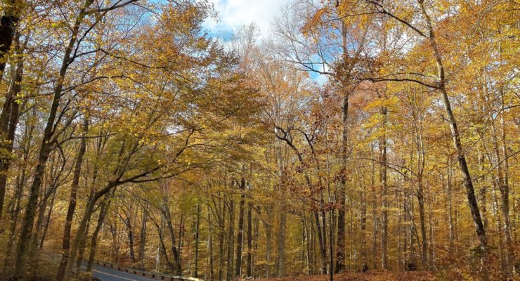 Scenic drive through Prince William Forest Park